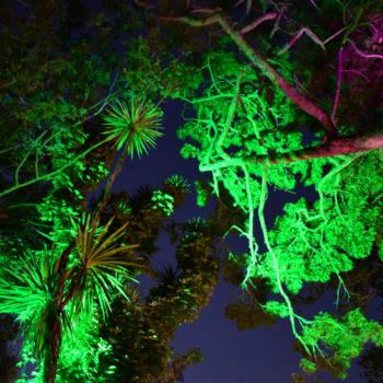 オークランド最大級のイベント「Lantern Festival」!のメイン画像