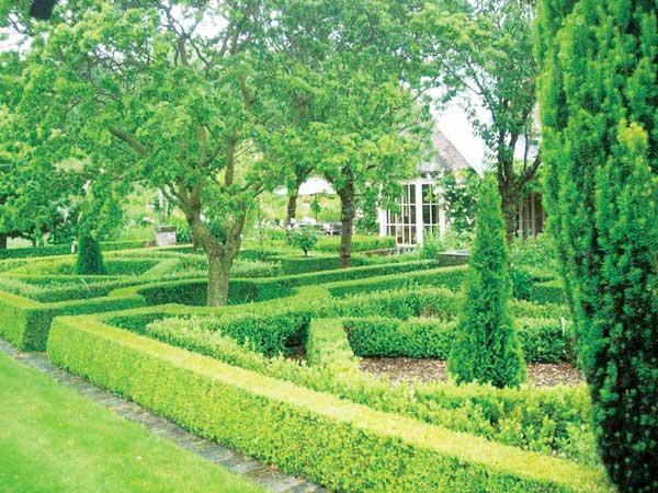 Frensham-Garden2.jpg